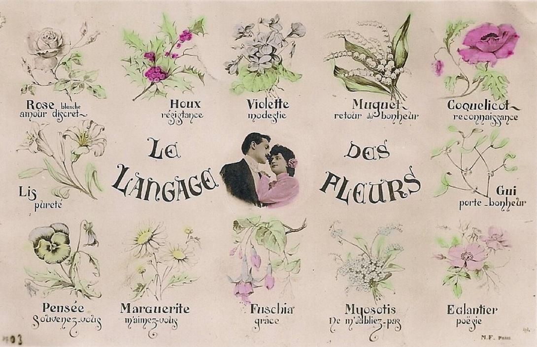 L 39 moi des fleurs - Langage des fleurs amitie ...